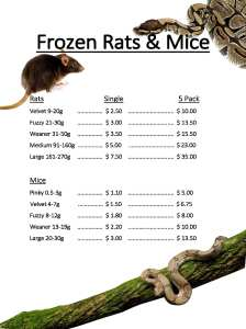 Frozen Rat & Mice Victor Harbor