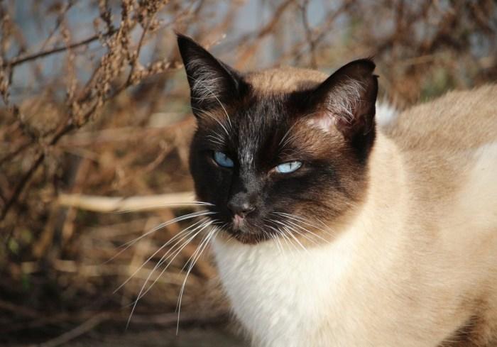 cat-1184995_1280