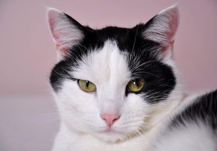 cats-796437_1920
