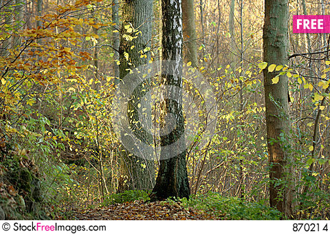 Free Danish Autumn Stock Images - 870214