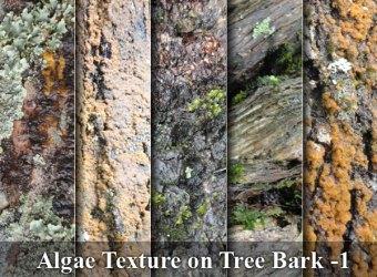 algae-texture-tree-bark-images-01