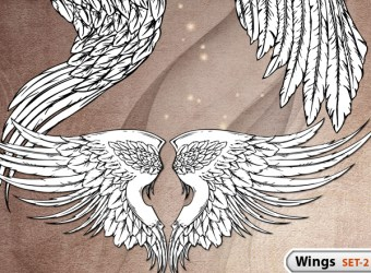 hand-drawn-wings-vector-photoshop-brushes-s2