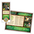 Tree Service Tri Fold Brochure Design