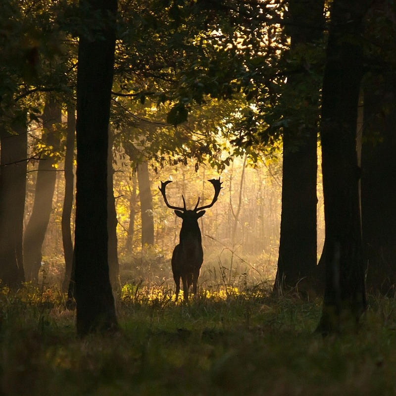 The Joy of Forest Photography