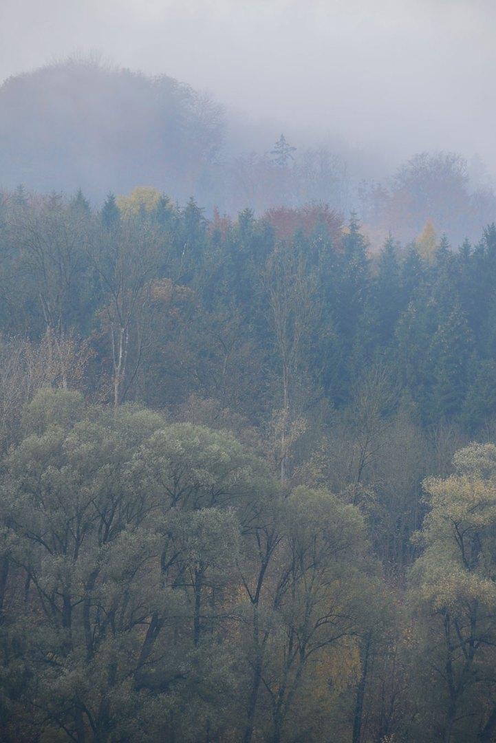 forest_donau_wallsee_austria_autum_2015