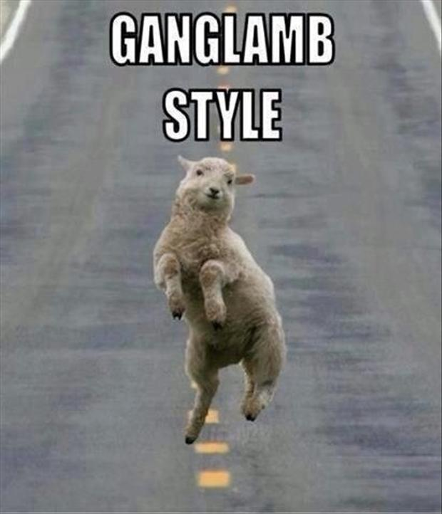 ganglamb