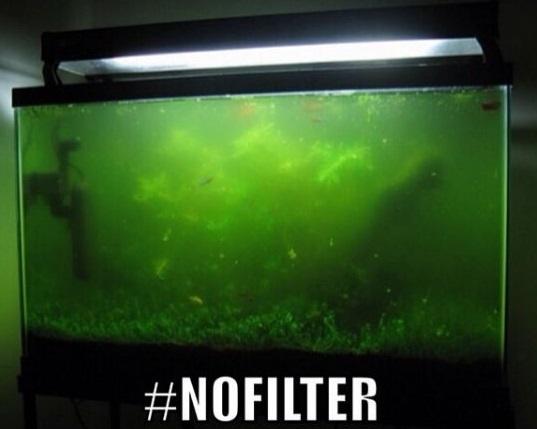 nofilter
