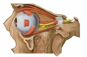 oko sljepilo1