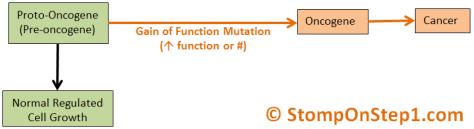 Oncogene Proto-oncogene gain of function