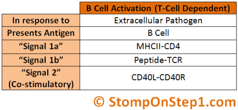 B Cell Activation T Cell Dependent CD40 Ligand CD40L MHCII CD4