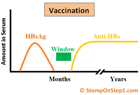 Hepatitis Serology Vaccination HBsAg Anti HBs HBsAb