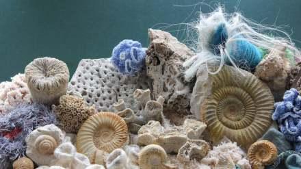 """Das Korallenriff in der Ausstellung """"Als die Steine noch lebten. 150 Millionen Jahre Albgeschichte""""."""
