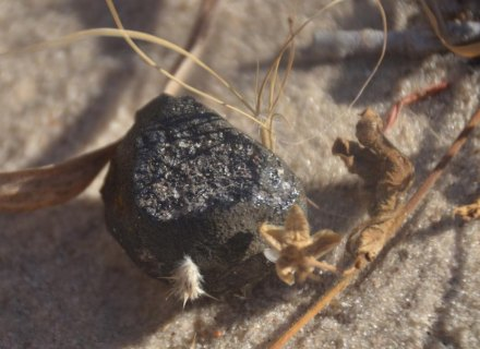 Ein Teil des Botswana-Feuerballs. Foto: Peter Jenniskens