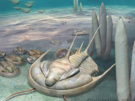 Picture: An artist's impression of a Redlichia trilobite on the Cambrian seafloor. Artwork by Katrina Kenny.