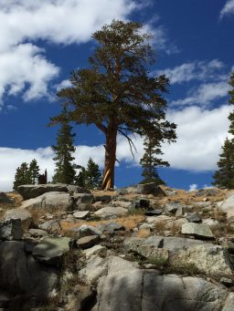 Coming down from Donohue Pass (1)