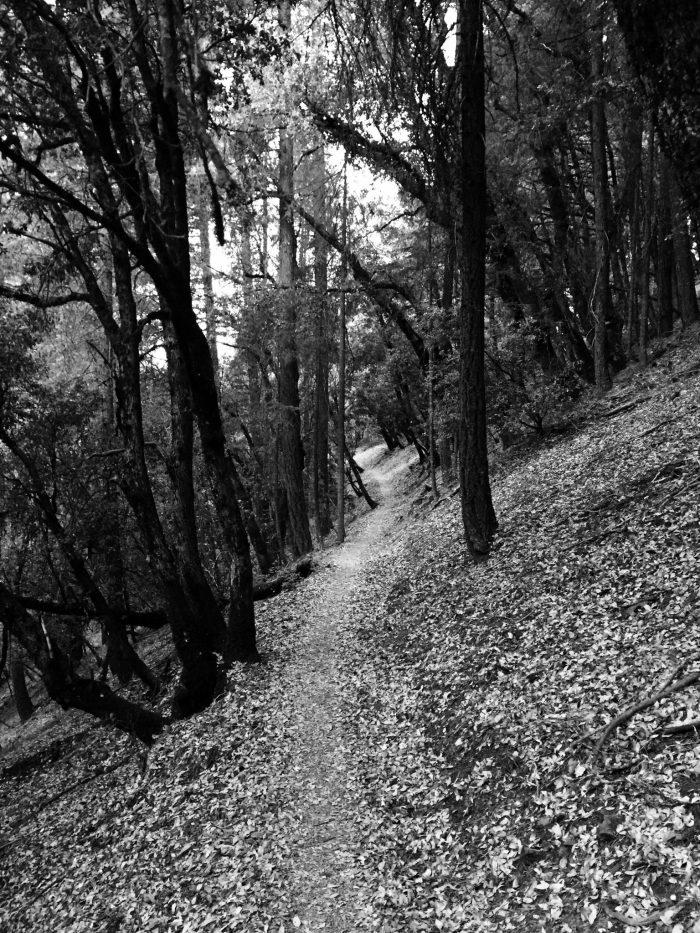 PCT traversing a quiet forest