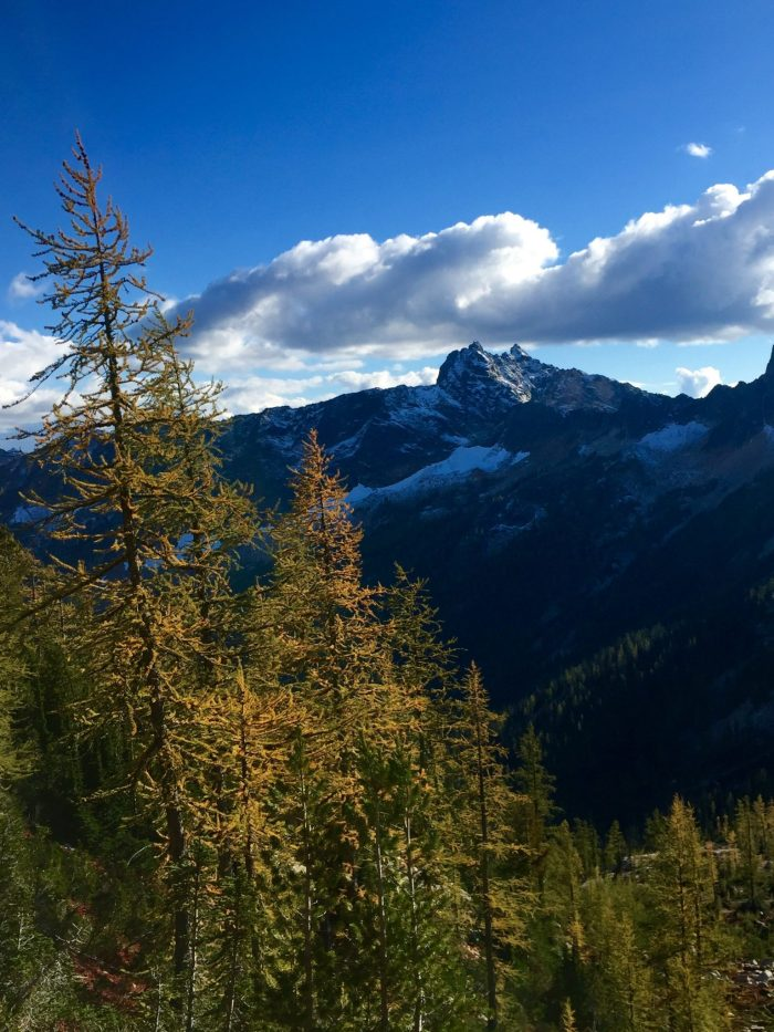 Golden larches and snow dusted peaks in the North Cascades