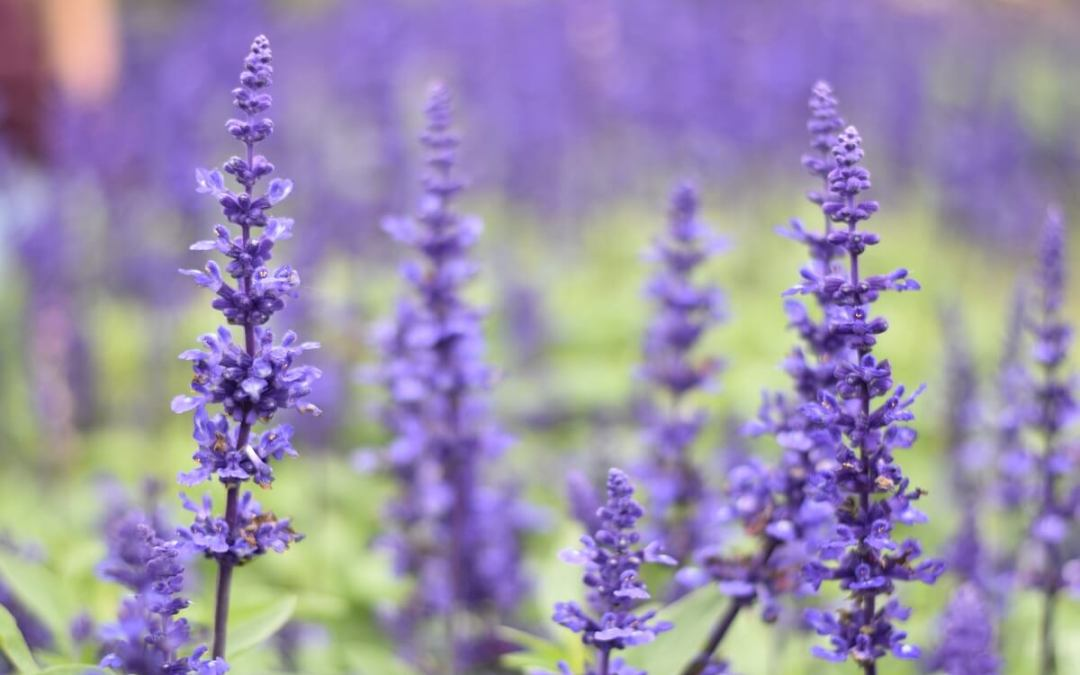 Intro to Lavender