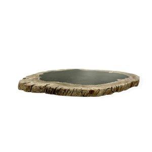 Slice of Petrified Wood