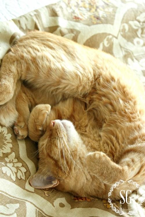 HOBBES-THE STONEGABLE CAT-nap time-stonegableblog.com
