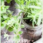 THE SCOOP #218
