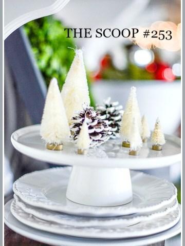 THE SCOOP #253