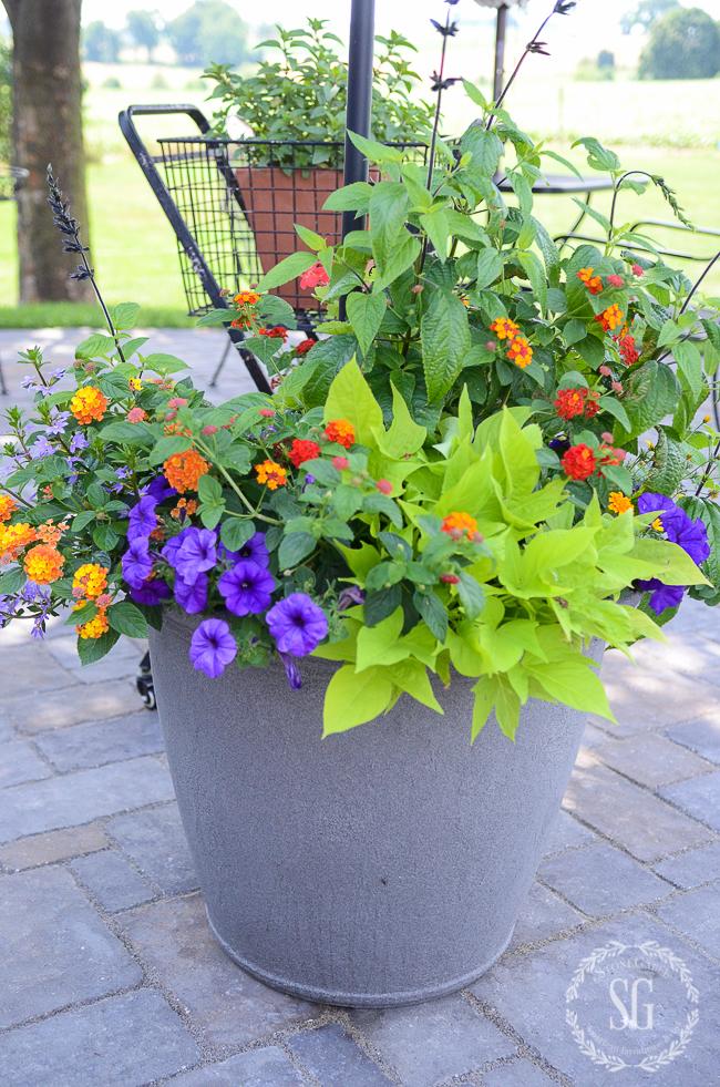 FABULOUS SUMMER POTS- KEEPING THEM BEAUTIFUL IN SUMMER'S HEAT