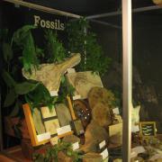 Fossil Display 002