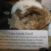 Fossil Display 016