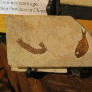Fossil Display 027