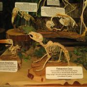 Mammals and Birds 013
