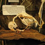 Mammals and Birds 015