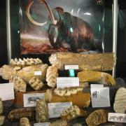 Texas Elephants 060
