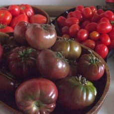 heirloom_tomato-love