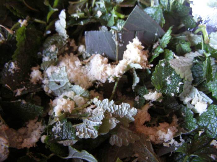 Fresh chopped herbs, eucalyptus, lemon balm and grated ginger , cold sore ointment diy