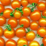 Golden Nugget Tomatoes