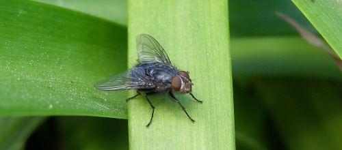 how to keep flies out of your home