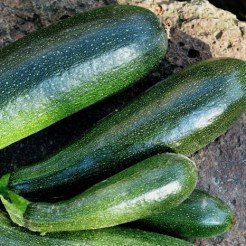 Zucchini, Black Beauty, organic seedlings for sale, nz