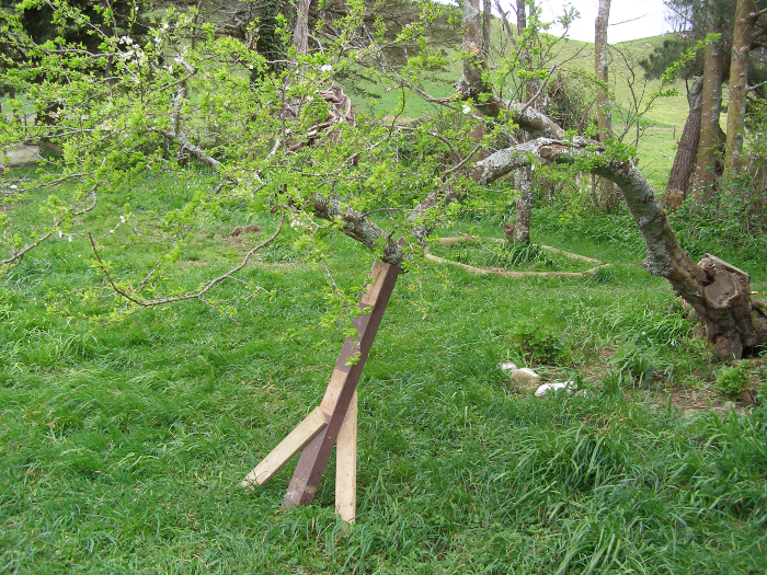 Propped up a plum tree that fell over in the wind