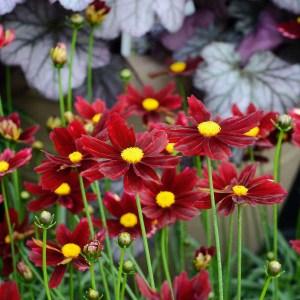 Plants at Stonyford