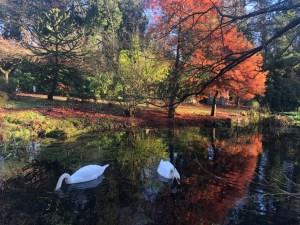 Stonyford Gardens 2