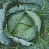 Kale Diet