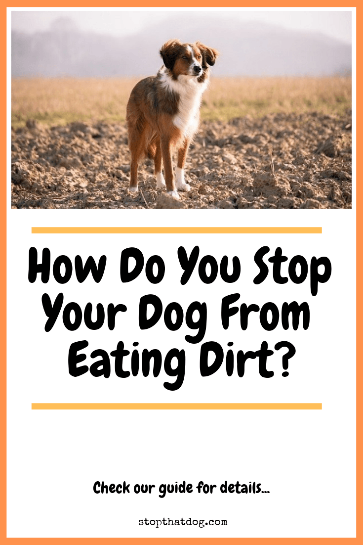 Wondering why your dog is eating dirt and how to stop it? If so, our guide reveals the reasons why this may happen and how to address it.