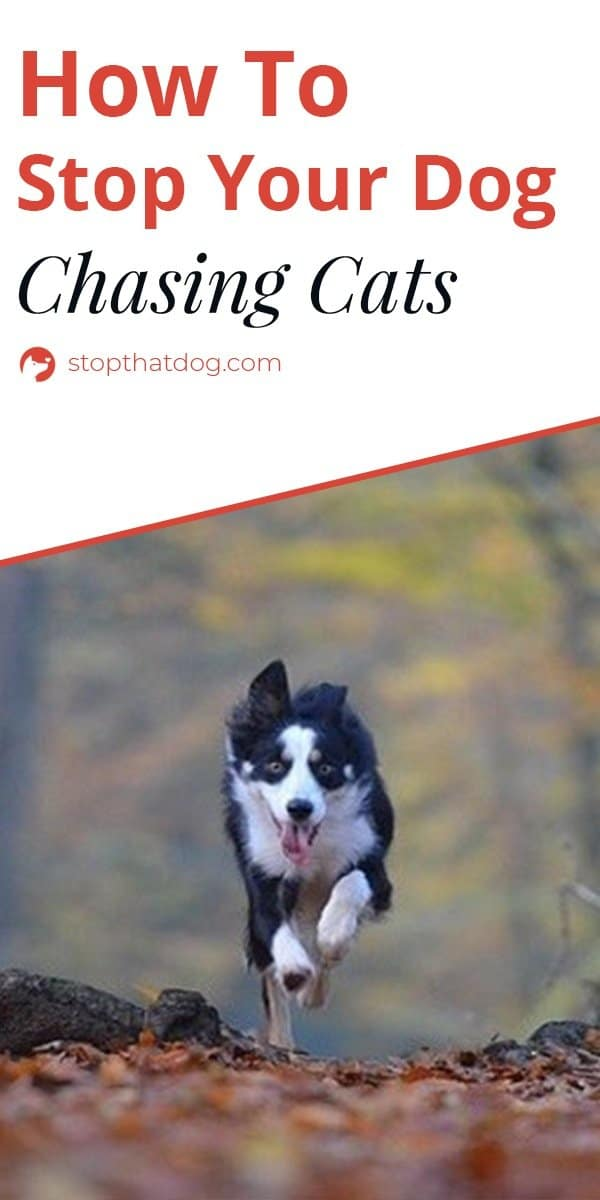 Want to stop your dog chasing cats, birds, and squirrels? If so, our guide reveals several tricks that\'ll help to stop the behavior.