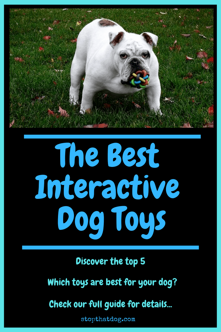 Looking for the best interactive dog toys? If so, our guide reveals the best options on the market. Discover the top 5 and pick the best for your dog!