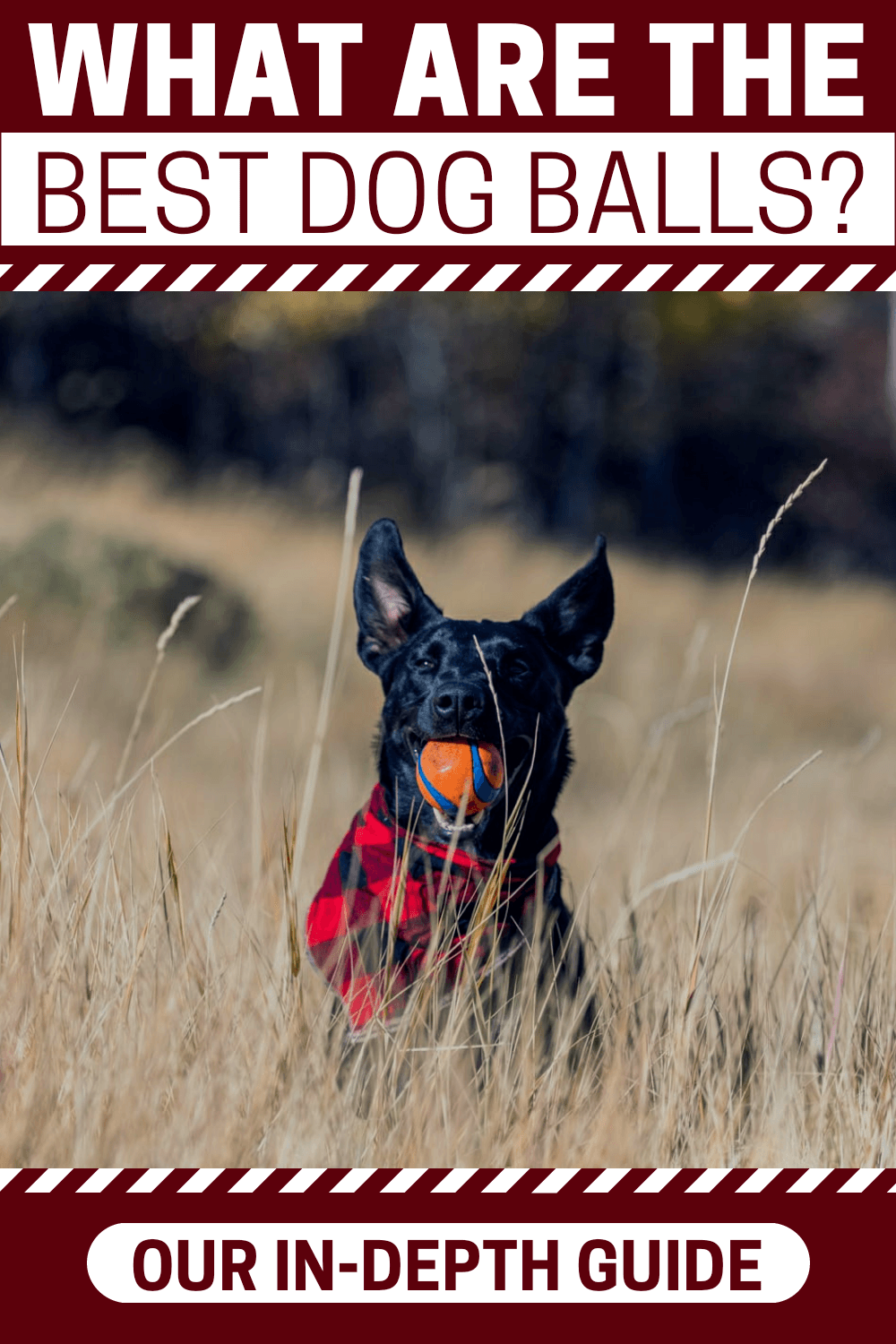 Want the best dog ball for your furry buddy? If so, this guide reveals the best options on the market. These won\'t let you down. Come take a look.