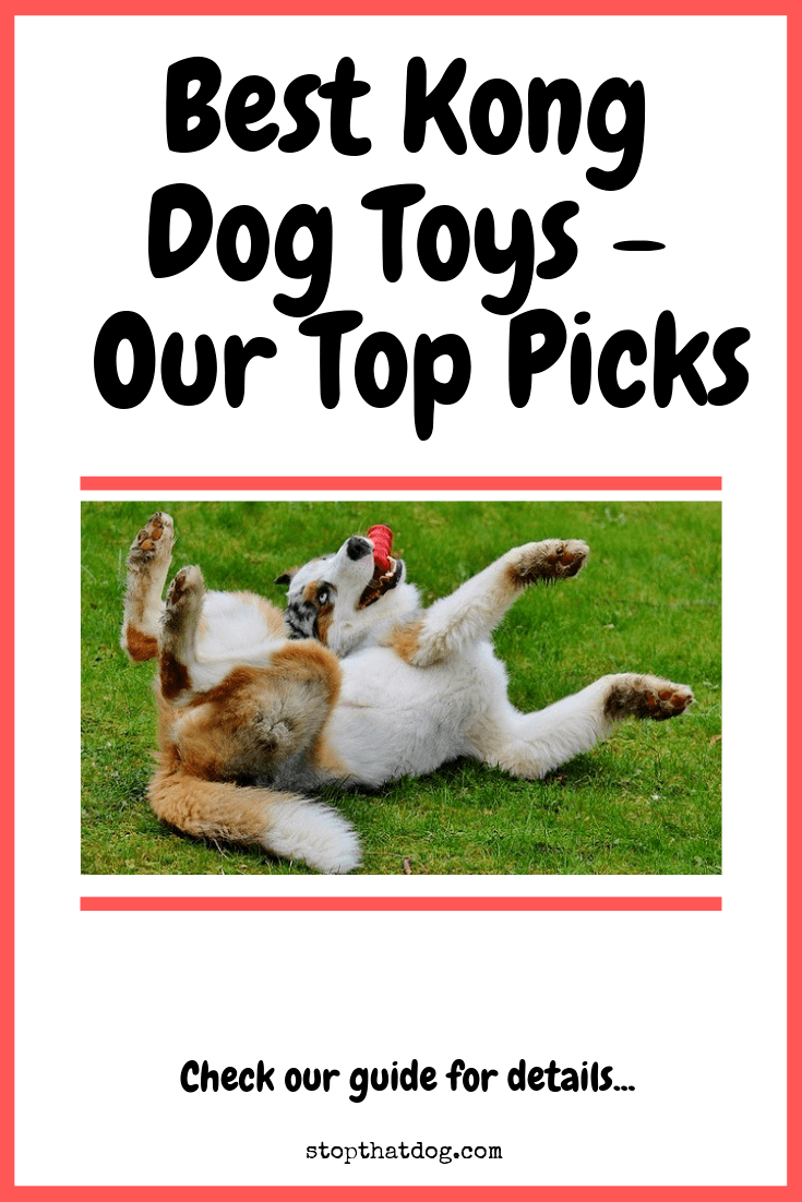 Looking to buy a Kong toy? If so, you\'re making a great choice. Our guide highlights the best on offer and weighs up the pros and cons of each option.