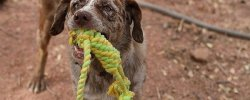 What Are The Best Dog Rope Toys? 54