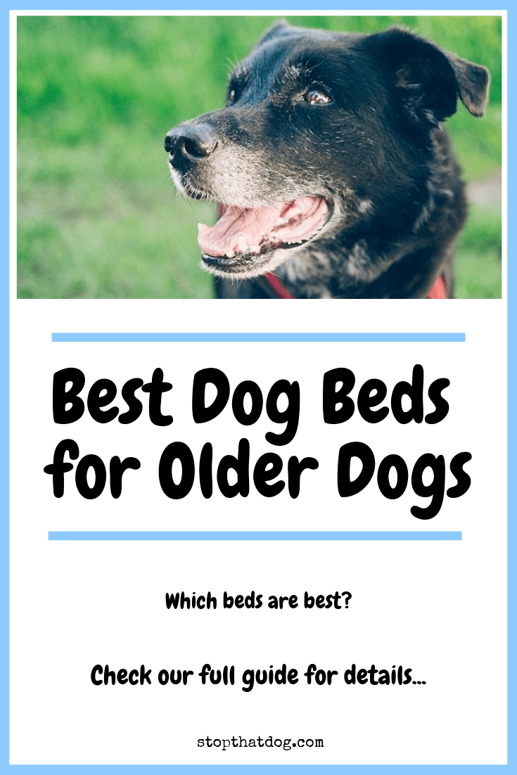 Looking to buy the best dog bed for an older dog? If so, our guide highlights the best options on the market, based on buyer reviews from dog owners.