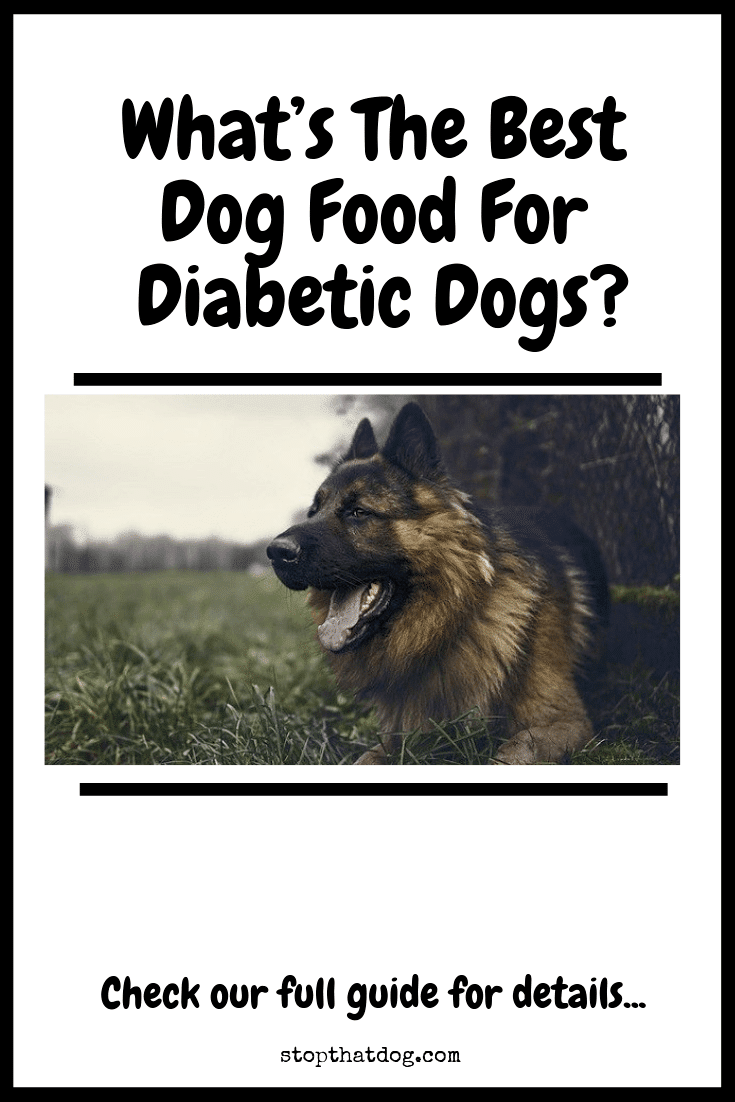 Looking to find the best dog food for diabetic dogs? If so, our guide reveals some of the best options on the market based on dog owner reviews.